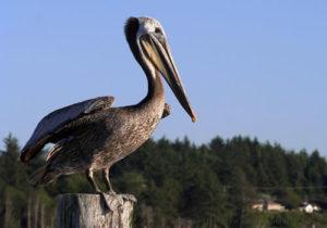 birdwatching near Brookings