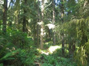 333 trail rain forest