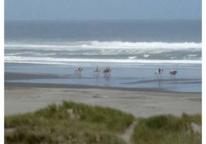 Horses riding on the beach near Winchester Bay