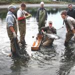 Rogue River salmon