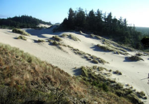 Picture of the Oregon Dunes