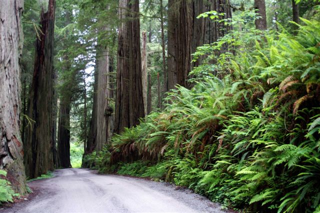 Crescent City Sightseeing Redwoods Fishing Camping Hiking