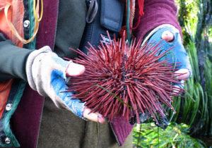 sea anemone tide pooling