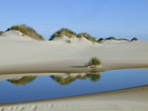 Oregon Dunes near Reedsport and Coos Bay